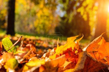 Foto de Hojas caídas en otoño bosque soleado - Imagen libre de derechos