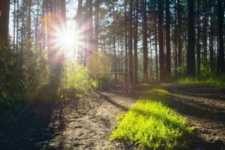 Photo pour Belle lumière du coucher du soleil traversant les bois - image libre de droit