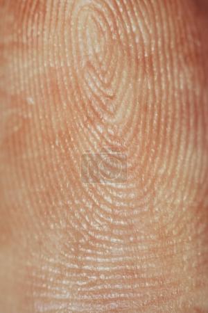 Fingerprint close-up view