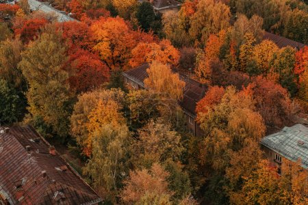Old town with red trees