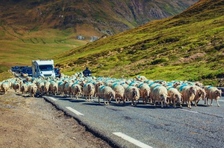 Photo for Jam on Alps mountains road. Sheeps walking on automobile road. - Royalty Free Image