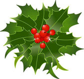 Illustration of Christmas Holly berries