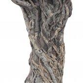 exotic tree trunk