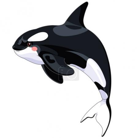Illustration for Cute Killer Whale isolated on white background, vector illustration - Royalty Free Image