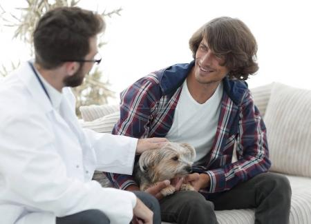 veterinarian conducts an examination of the Yorkshire terrier.