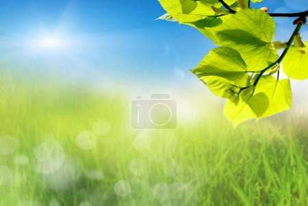 plant and green grass with sky