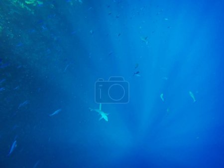 Underwater sea background with fishes and seaweeds