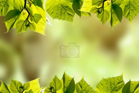 Photo for Green summer tree leaves with blurred green background - Royalty Free Image