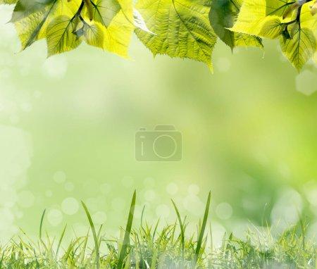Photo pour Feuilles vertes et herbe sur fond de printemps flou - image libre de droit
