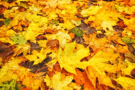 A lot of dirty autumn leaves