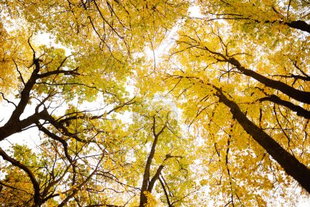 trees with golden leaves on branches