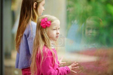 girls watching animals at the zoo