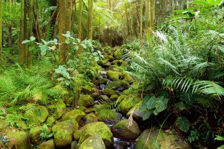 Lush tropical vegetation of Hawaii Tropical Botanical Garden of Big Island of Hawaii, USA