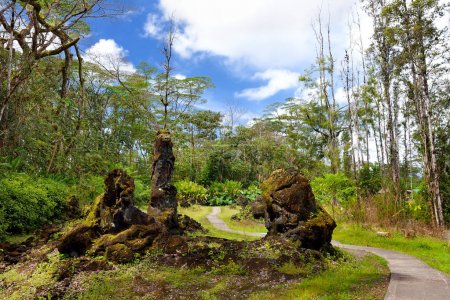 Lava molds of tree trunks in Lava Tree State Monument on Big Island of Hawaii, USA