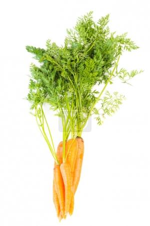 fresh carrots with leaves