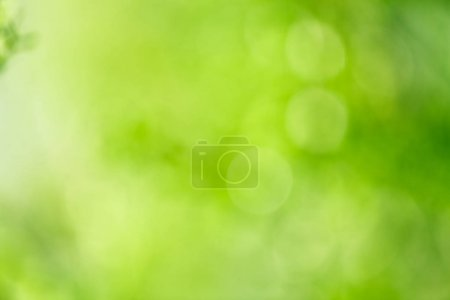 abstract blurred foliage