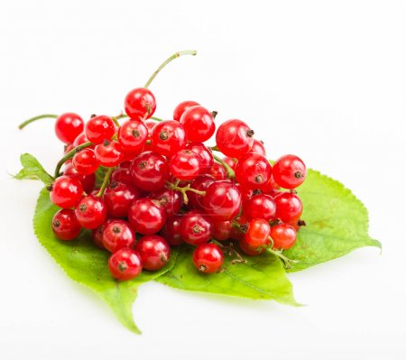 Red currants on green leaves
