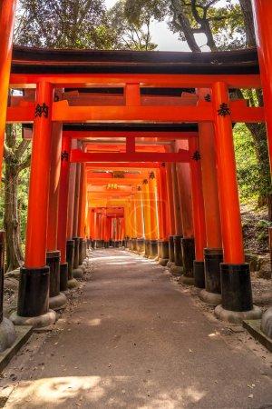 Wooden Torii Gates near Kyoto