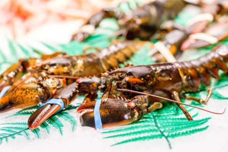 Lobsters at seafood market