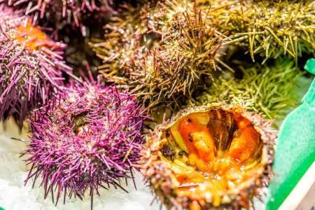 Fresh sea urchins on cooled market display...