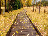 autumn park with boardwalk