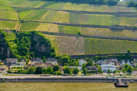 Green vineyards on shore