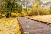 Meadow with boardwalk in autumn