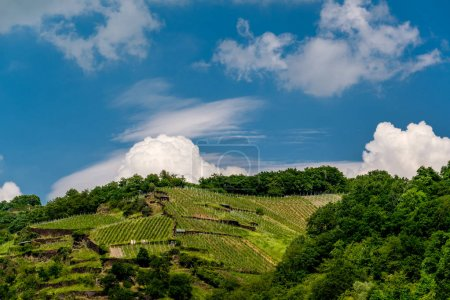 Green vineyards with blue sky
