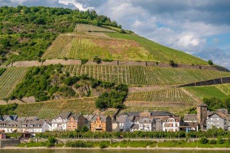 Vineyards at Rhine Valley