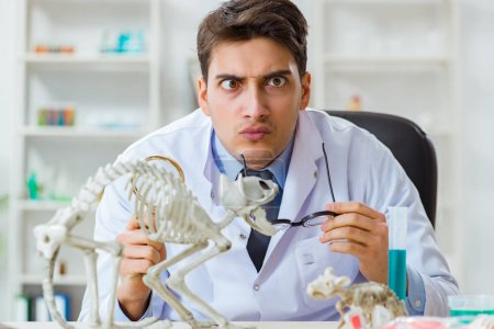Photo for Funny scientist with cat skeleton in lab clinic - Royalty Free Image