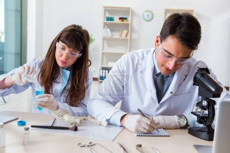 Paleontologists looking at bones of extinct animal...