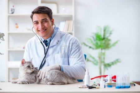 Vet examining sick cat in hospital