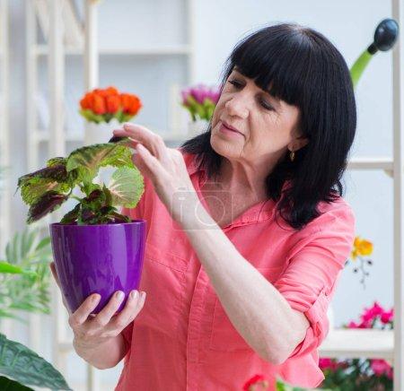 Photo pour La fleuriste qui travaille dans la boutique de fleurs - image libre de droit