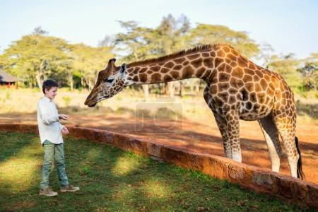 Kid feeding giraffe in Africa