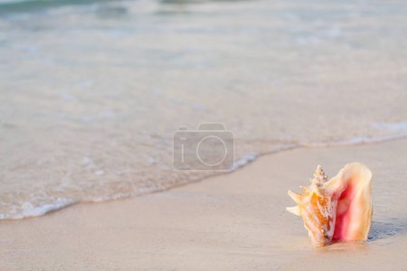 Giant shell on beach