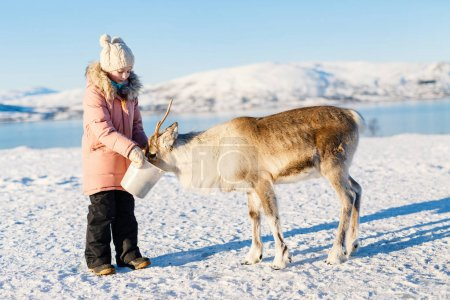 Little girl feeding reindeer on sunny winter day in Northern Norway