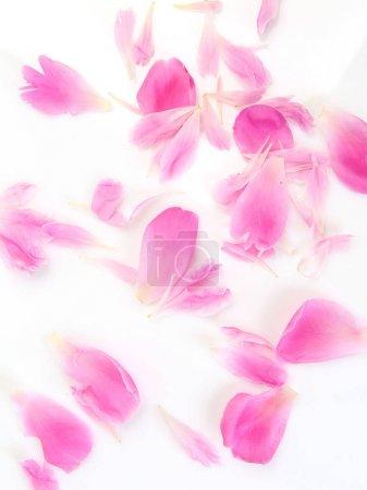 Photo pour Pétales de roses sur fond blanc - image libre de droit