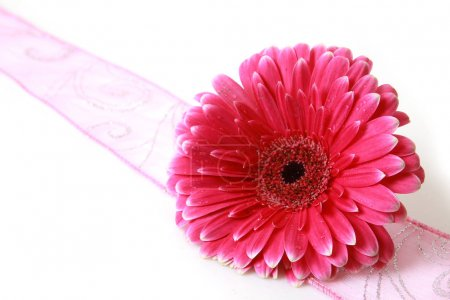 Photo for Pink flower and ribbon - Royalty Free Image