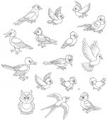 Black and white vector illustrations of different birds drawn in cartoon style including several species