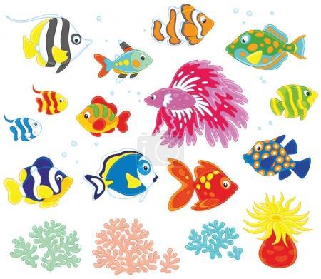 Vector conjunto de peces de colores en estilo de dibujos animados