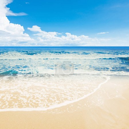 Tropical beach ocean