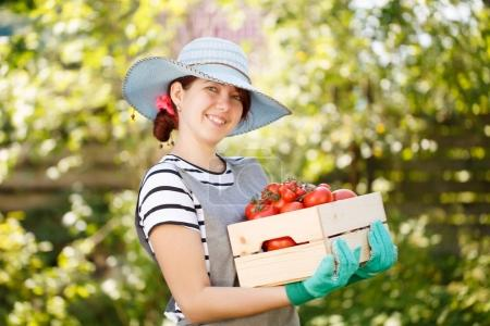 Photo for Woman in hat with box tomato in vegetable garden on blurred background - Royalty Free Image