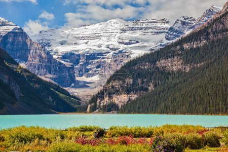 Photo pour Fleurs sur la rive du lac Louise glaciaire. eau émeraude du lac entouré de montagnes, glaciers et forêts de pins. Parc national Banff, Montagnes Rocheuses, Canada - image libre de droit