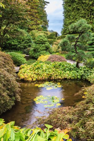pond with lilies in scenic decorative park