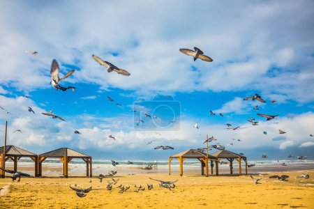 noisy flock of pigeons taking off in fright