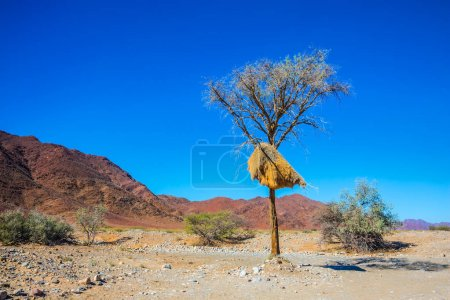 Roadside tree growing in Namib desert