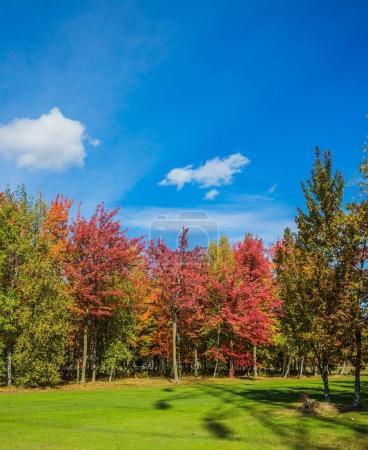 Photo pour L'été indien au Canada français. Arbres multicolores magnifiquement répartis sur fond de ciel bleu - image libre de droit