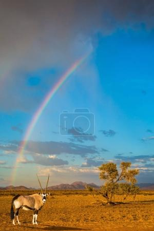 Magnificent rainbow crossing sky