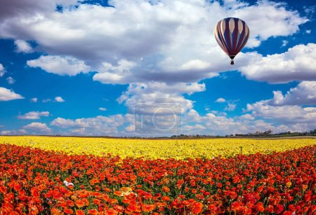 field of bright flowers and air balloon