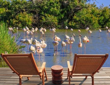 deckchairs near flock of pink flamingos